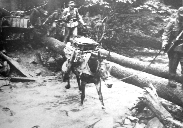 A German mountain resupply column with mules crosses a forest stream in the Caucasus in 1942