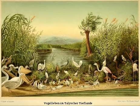 radde Ornis Caucasica — Die Vogelwelt des Kaukasus, systematisch und biologisch-geographisch beschrieben